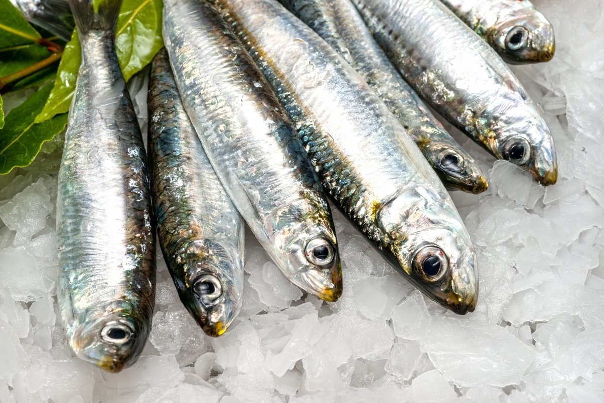 Does Eating Fish Help Prevent Infections And Diseases Like Coronavirus