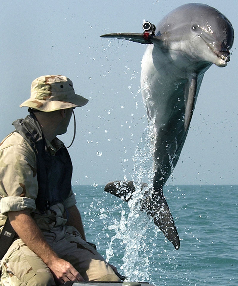 Dolphin with Camera