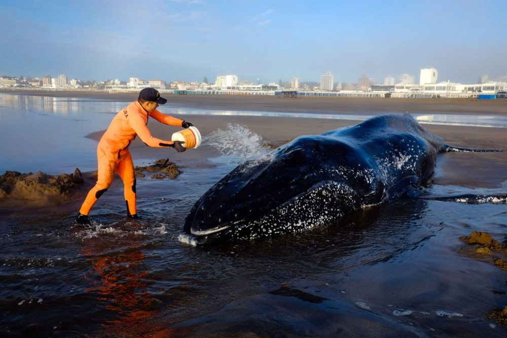 Environmentalists and neighbors fought to save the cetacean