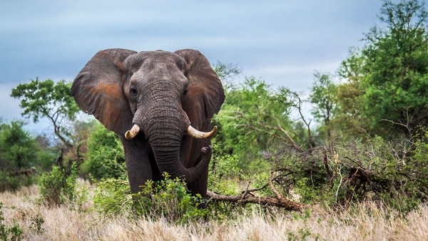 Exotic and Majestic What are the Seven Longest Living Animals in the World