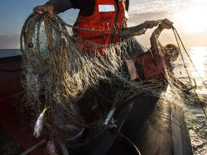 Fishing Nets Removed From The Gulf of California That Harm The Vaquita Marina And Other Sea Life
