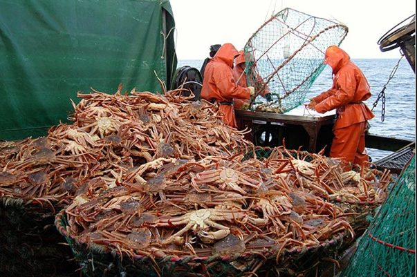 Five DPRK Citizens Convicted in Primorye for Illegal Crab Fishing
