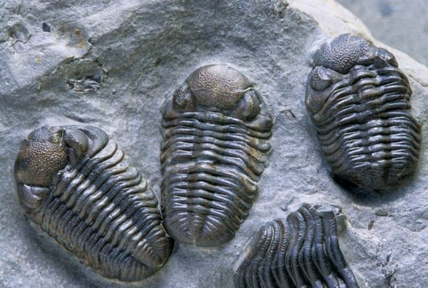 How did marine life end during the extinctions in history