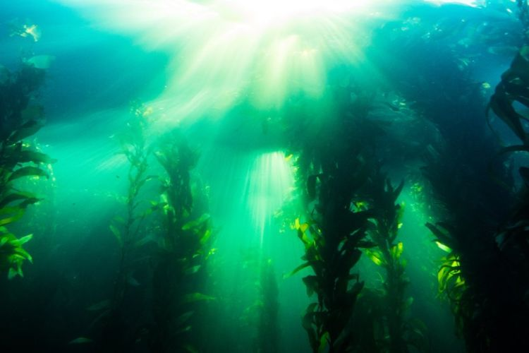 How The Lush Underwater Forests Of The Arctic Are (and why they are growing while in other parts of the ocean they disappear)