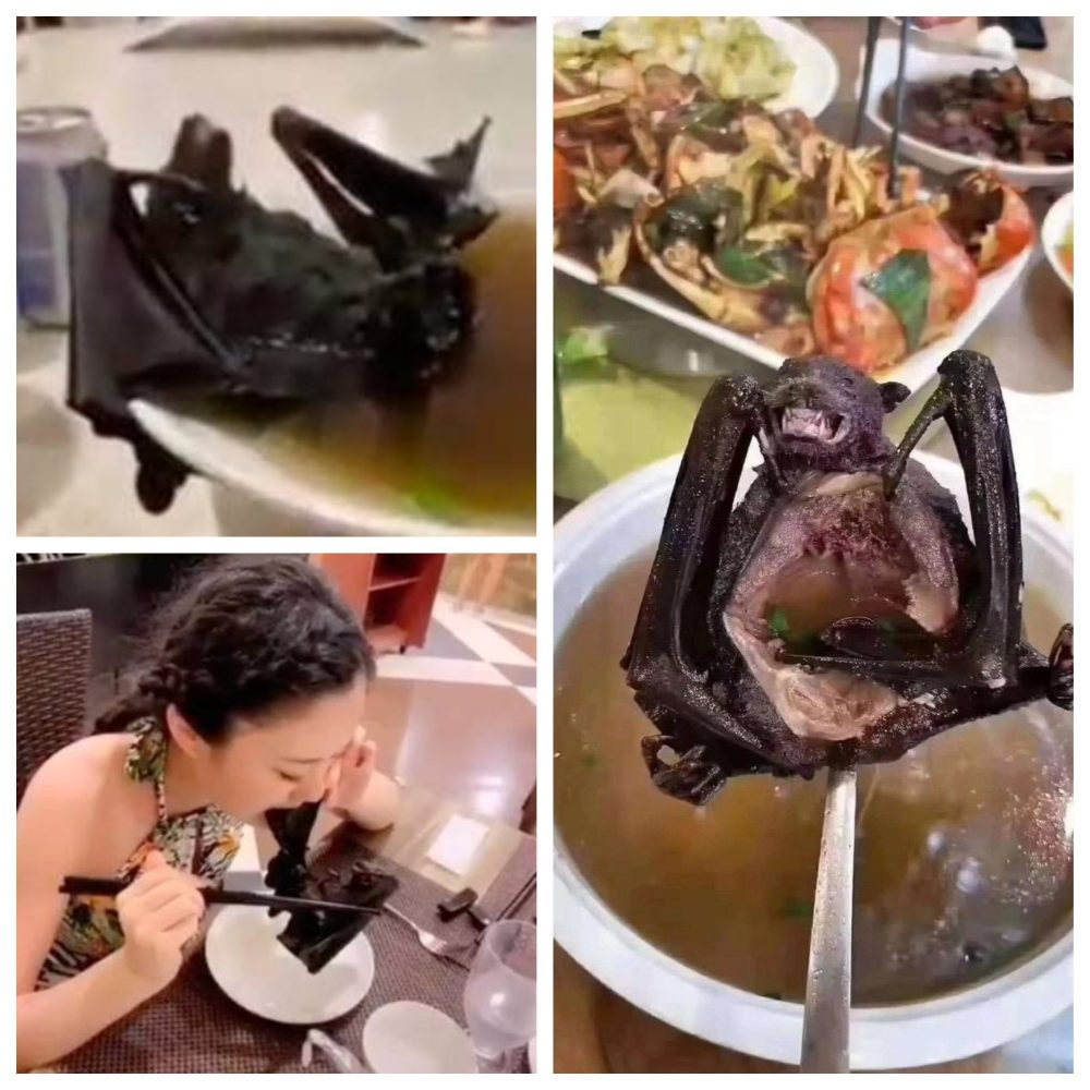 What Is Happening In China? Forcing Pigs To Bungee Jump Ans Eating Bat Soup