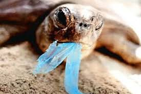 More Than 100 Turtles Are Found Dead; They Had Plastic In Their Intestines