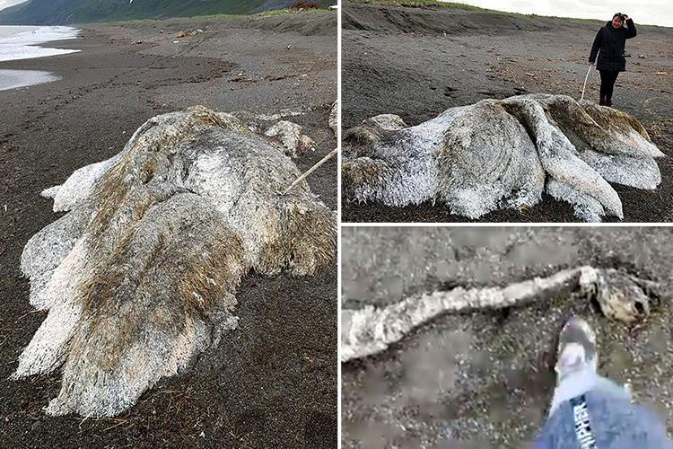 Mysterious furry sea monster appears in Russia