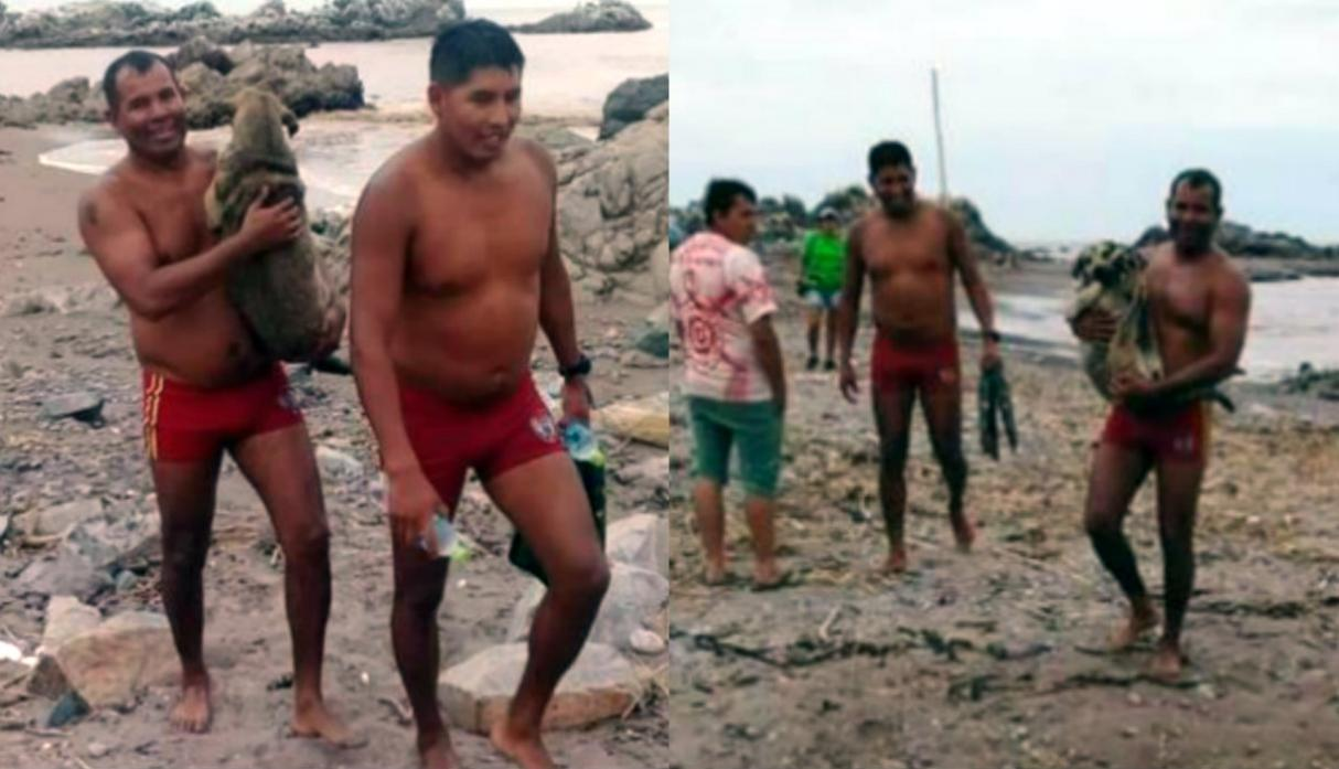 Rescue Police in Peru Rescued a Pregnant Dog that was Dragged by a Huaico in Moquegua