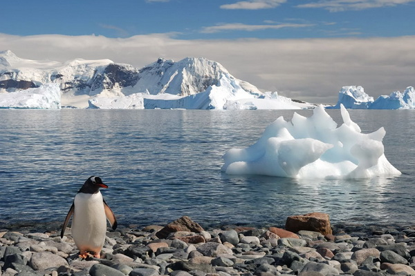 Scientists Have Reduced the Forecast of Sea Level Rise Seven Times Due to Melting of the Antarctic