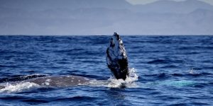 Solar Storms Can Cause Whales To Be Stranded