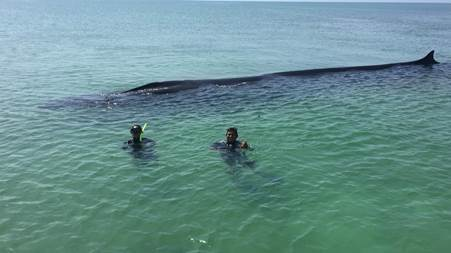 Successful whale rescue in the Isla Contoy Protected Natural Area