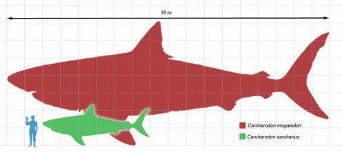 Teeth Of The World's Largest Prehistoric Shark Found In Yucatan Mexico
