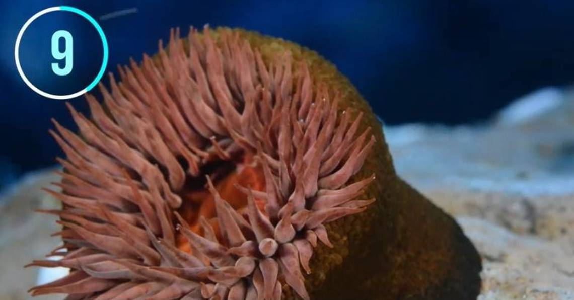 The 10 Weirdest Creatures That Live in the Chilean Sea