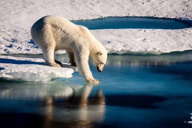 The Arctic Will No Longer Have Sea Ice For The First Time In A Billion Years