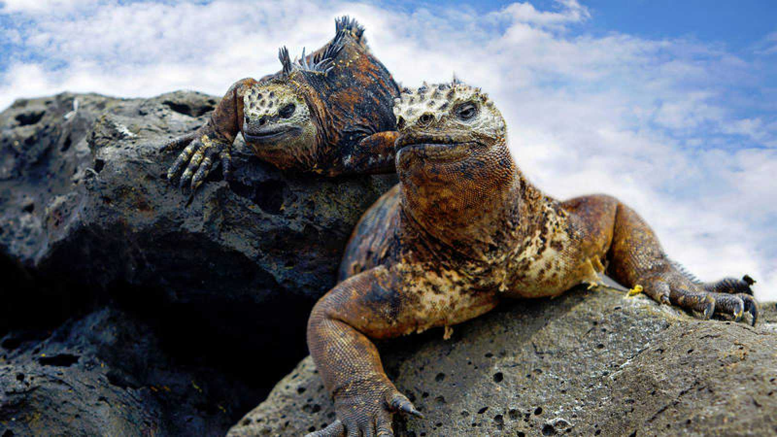 The Galapagos Islands Have Ten Times More Invasive Marine Species Than Previously Thought