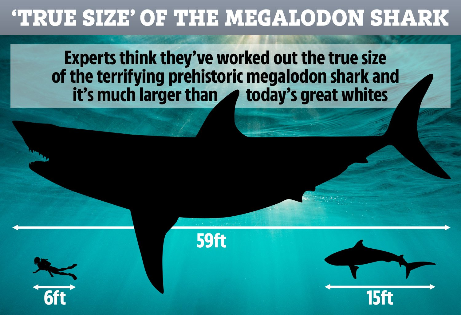 The True Size Of The Greatest Marine Predator In History Revealed