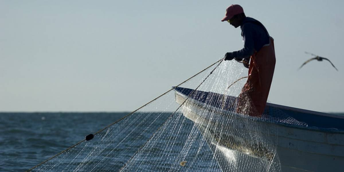 The US Will no Longer Receive its Marine Products Due to the Extinction of the Vaquita Marina