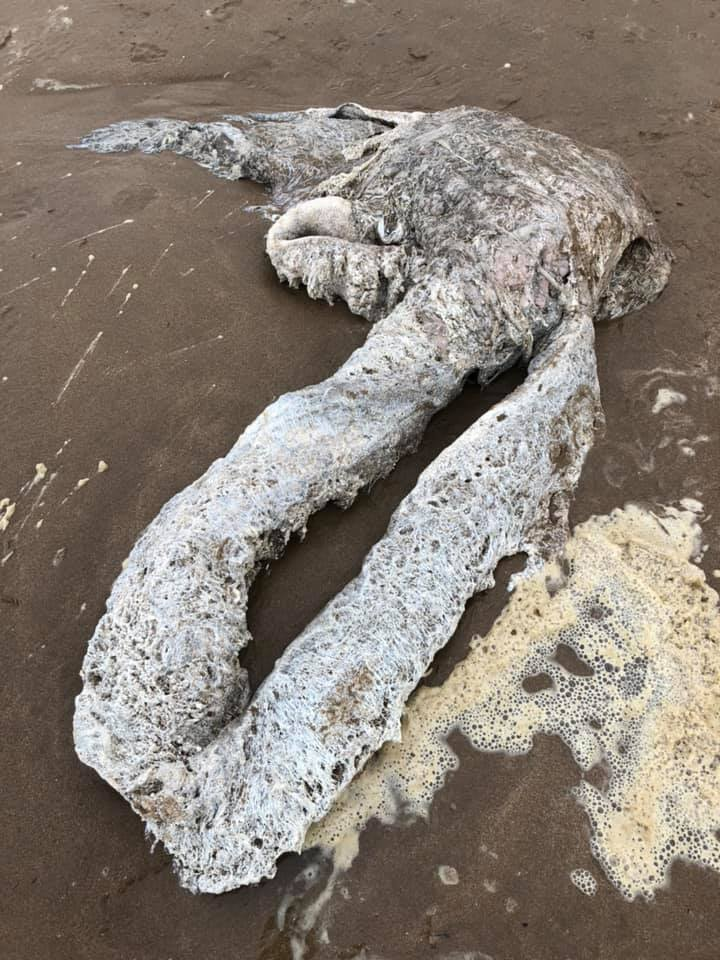 They Come Across The Creepiest Of Sea Creatures Lying On The Beach And Its Appearance Is Terrifying1