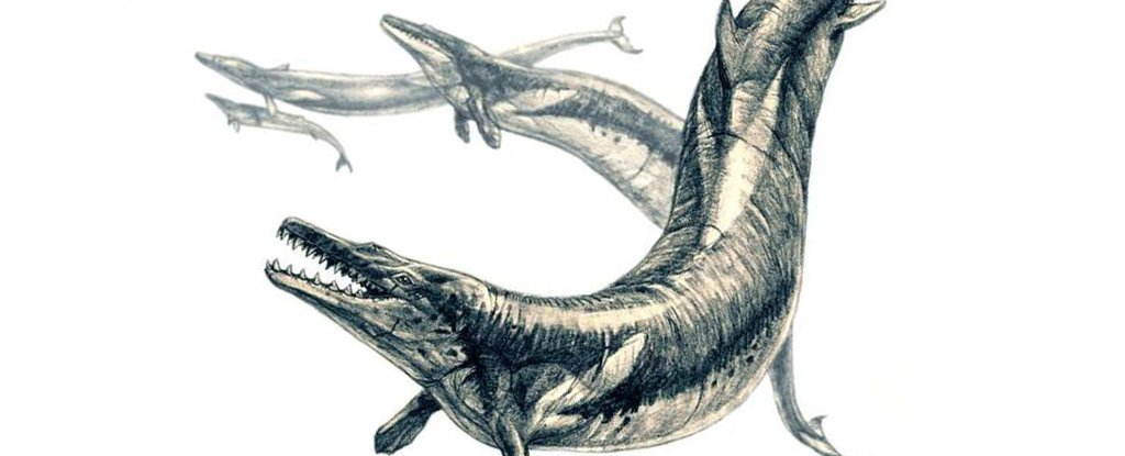 They Discover the Remains of a Whale Inside Another Giant Whale That Lived 35 Million Years Ago
