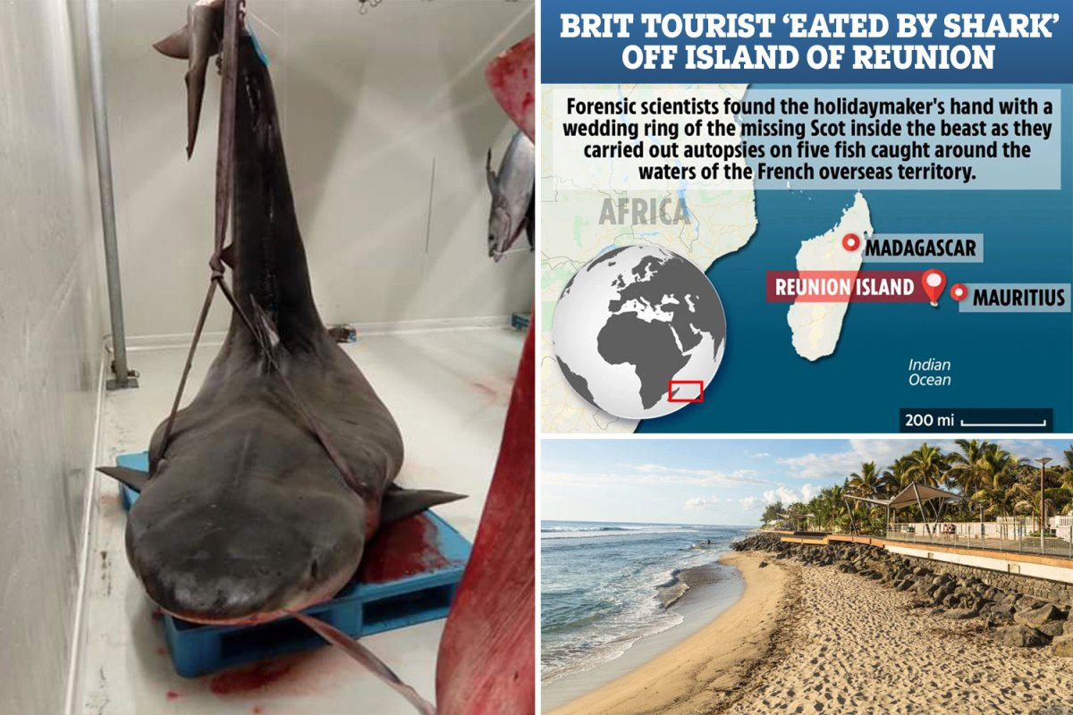 They Find A Hand With Wedding Band Inside Captured Shark During Its Autopsy