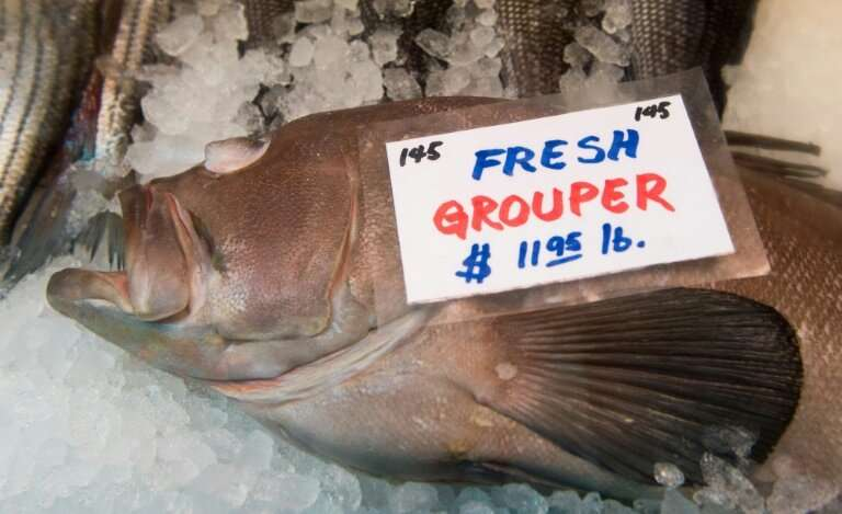 Fish Fraud! They Sell Ice Over Fish And That's How They Cheat Consumers