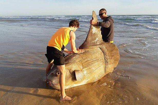 They Thought it was a Ship Wreck, They Approached and Found a Strange Creature