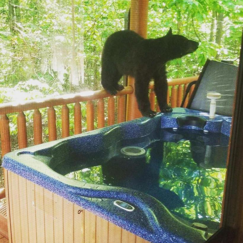 They Wake Up To Find An Uninvited Guest Enjoying Their Jacuzzi