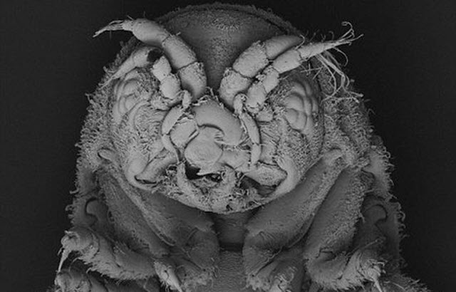 This Crustacean Could Have the Key to Develop Wood Biofuels