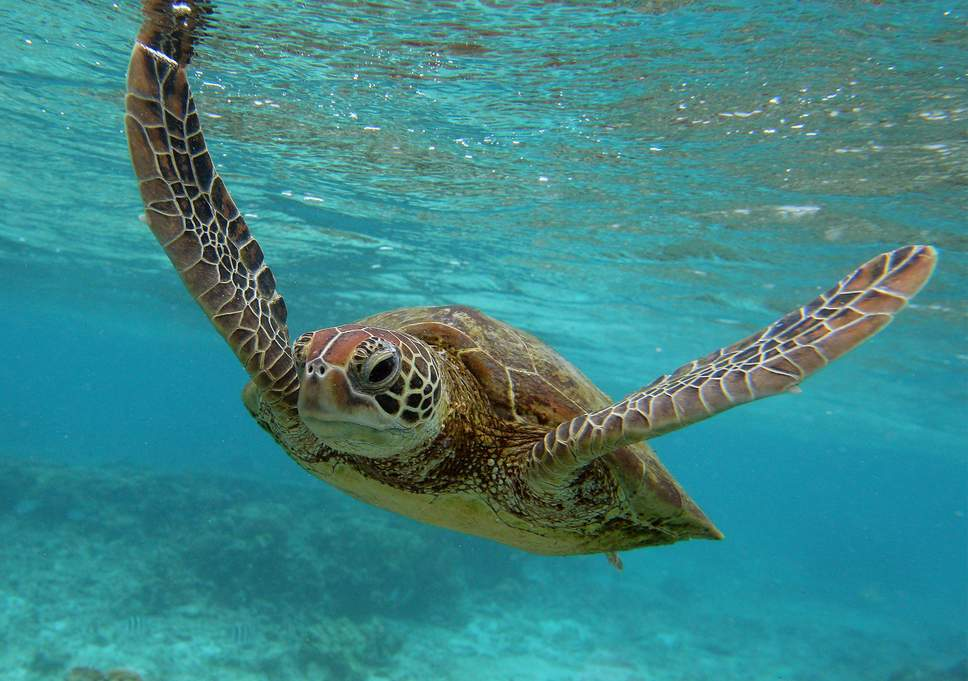 Thousands of Turtles Killed Each Year by Small-Scale Fisheries, Scientists Warn