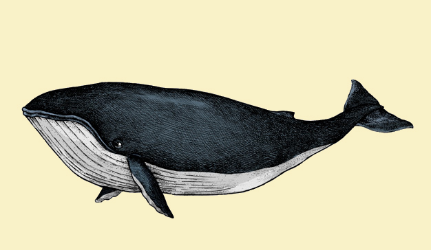 To Save the Whales is to Save Ourselves