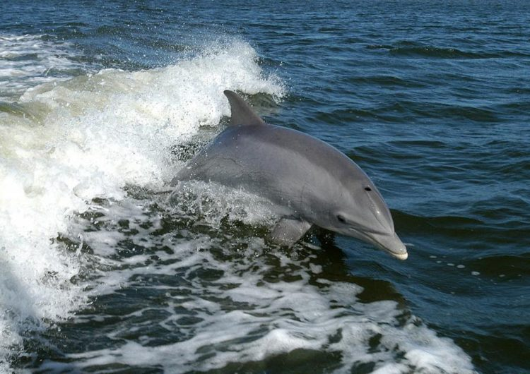 Ukraine Army Dolphins Died of Hunger After the Russian Annexation