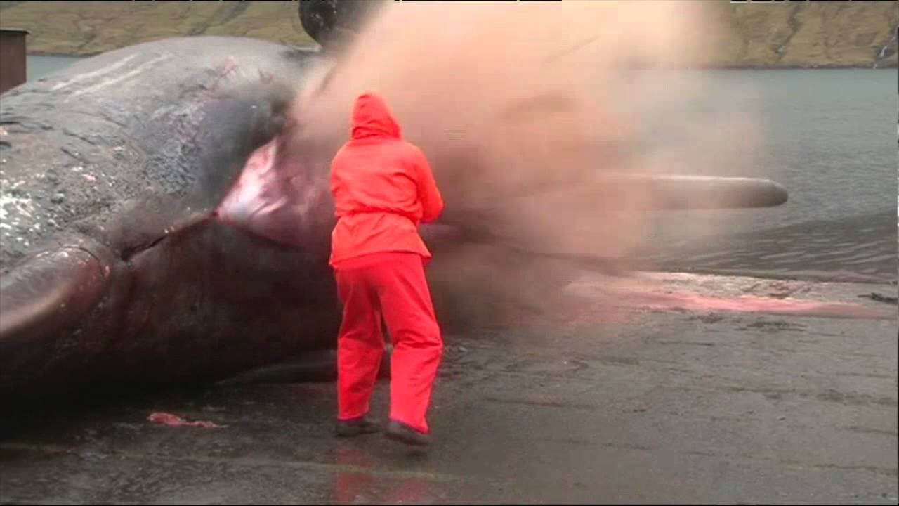 Why Do Dead Whales Explode