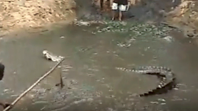 Workers Worked Inside The Pit Until A Huge Crocodile Appears To Have Devoured Them